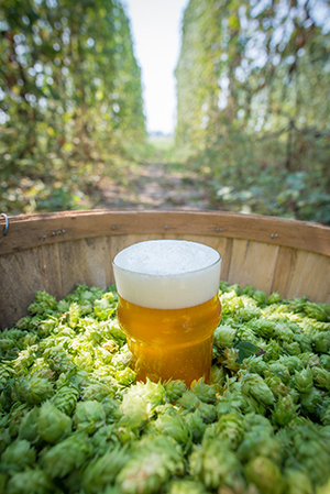 hops-featured
